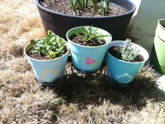 $1 pots, acrylic paint and stencils. (Left to right plants are citrus mint, hyacinth, and English lavender)