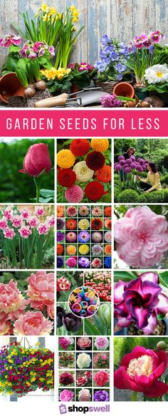You don't necessarily have to pay high prices to get quality garden seeds. These 18 flower seed packs are priced insanely cheap and have the reviews to prove they will produce beautifully in your garden. Shop the seed collection now!