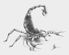 Scorpion Pencil Drawing is probably the easiest and efficient arts, which you can get as a complete time period as well as total time pastime or work. Cool Drawings, Drawing Sketches, Pencil Drawing Images, Chicano Drawings, Best Pencil, Cross Tattoo Designs, Famous Artists, Art Tutorials, Cool Tattoos