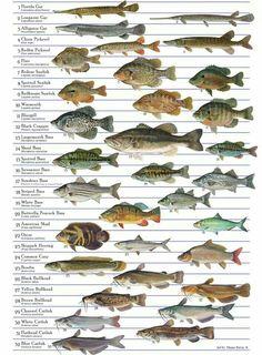 Fish for aquaponics