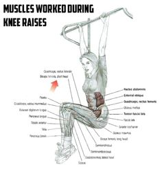 Muscles Worked During Knee Raises - Healthy Fitness Workout Abs