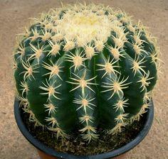 Viveros Vangarden: cactus