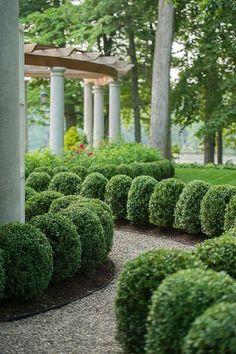 "flowersgardenlove: "" Box hedges Beautiful gorgeous pretty .ColdClimateGardenings: flowersgardenlove: "" Box hedges Beautiful gorgeous pretty . Boxwood Garden, Topiary Garden, Garden Shrubs, Garden Landscaping, Shade Garden, Boxwood Hedge, Dwarf Boxwood, Landscaping Software, Formal Gardens"