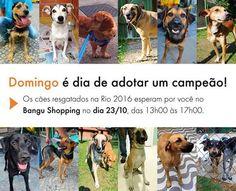 BONDE DA BARDOT: RJ: Maratona de adoção de animais resgatados nos Jogos Rio 2016 acontece em Bangu, neste domingo (23/10)