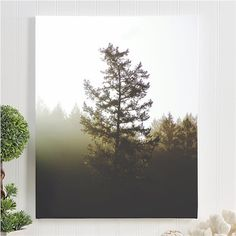 "redwood canvas gallery wrap / nature landscape canvas art print / large canvas wall art / 8x10 11x14 16x20 24x36 / ""morning redwood forest"""