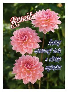 Magdalena, November, Rose, Flowers, Plants, November Born, Pink, Plant, Roses