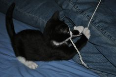 Caught Sox today catching the 'Evil String'! Needless to say the string did not stand a chance.