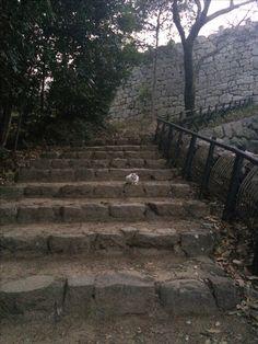 城には猫がいる 2017.01.28