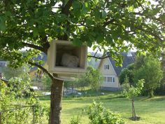 Computer, hanging from a tree, in a national park in Lithuania. Really? Really. #travel #photos #funny
