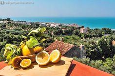 Sagra delle arance, il programma della 32ª edizione - http://blog.rodigarganico.info/2016/eventi/sagra-delle-arance-programma-della-32a-edizione/