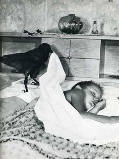 A crow tucks a little boy into bed.
