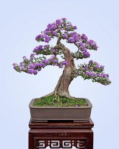 #bonsai #bonsaitree #trees_art