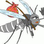Rimedi naturali per allontanare le zanzare
