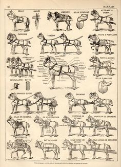 parts of a horse harness diagram guide to horse training and rh pinterest com Driving Horse Team Harness Pony Harness Diagram
