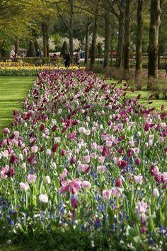 Beautiful Spring Garden Park Keukenhof, Dutch Garden World, Flower Bulbs |  Keukenhof Spring Garden | Pinterest | Garden Park And Gardens