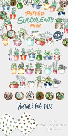 Potted Succulents Illustration Pack by plaidgecko on @creativemarket