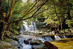 Liffey Falls. Photo by Carol Haberle, article for Think Tasmania.
