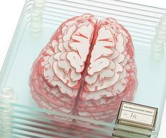 Study for your anatomy final while knocking back a few drinks using these brain specimen coasters. Ideal for doctors and biology majors, the coaster features sliced up brain images that come together to form a realistic model of the human brain when stack Biology Major, Brain Art, Ideas Geniales, Anatomy Art, Loose Leaf Tea, Drink Coasters, Cool Gifts, Projects To Try, Creations