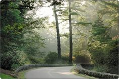 Frederick Law Olmsted designed the winding three–mile Approach Road to Biltmore House