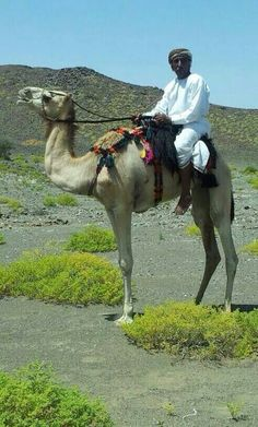 Beautiful Omani Heritage -Camels' riding