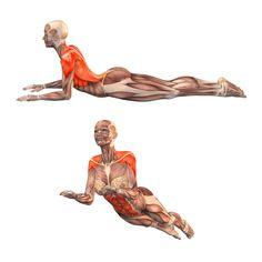 Half-cobra pose - Ardha Bhujangasana - Yoga Poses | YOGA.com