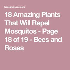 18 Amazing Plants That Will Repel Mosquitos - Page 18 of 19 - Bees and Roses