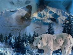 The wolf in the wild Photo: Princes. This Photo was uploaded by thompsonstephanie Wolf Photos, Wolf Pictures, Animal Pictures, Photomontage, Beautiful Creatures, Animals Beautiful, Beautiful Images, Wolf Mates, Wolf Painting