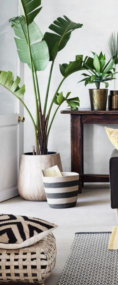 Decorating with House Plants | Rustic Decor