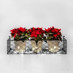 Festive poinsettia with Christmas lights. Perfect for an indoor window box display. Hand made lattice window box from Garden Requisites. Indoor Window Boxes, Winter Window Boxes, Christmas Window Boxes, Indoor Christmas Lights, Christmas Light Show, Christmas Rose, Holiday Lights, Whimsical Christmas, Window Box Flowers