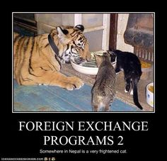funny-pictures-foreign-exchange-programs - http://ebooks2buy.biz/photojobs - Make Money With Your Pictures World Wide