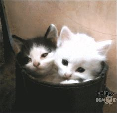 sleepy bucket o' cats gif