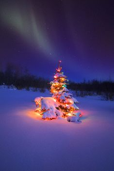 Christmas Tree under the Northern Lights, Alberta, Canada | by circle1720, via Flickr