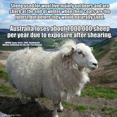 Shearing risks.
