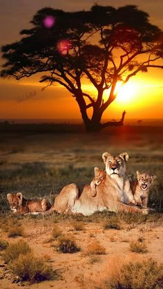Ideas Baby Animals Photography Big Cats For 2019 Nature Animals, Animals And Pets, Baby Animals, Cute Animals, Colorful Animals, Safari Animals, Beautiful Cats, Animals Beautiful, Beautiful Family