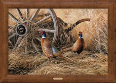 Fall Pheasants - Framed Print - American Expedition