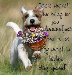 Goeie more. Good Morning Good Night, Good Morning Wishes, Morning Messages, Good Morning Quotes, Greetings For The Day, Evening Greetings, Wish Quotes, Cute Quotes, Lekker Dag