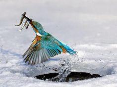22 Most Beautiful Birds In The World. #Ostriches, #Hummingbirds, #Emus, #Owls, #Parrots, #Pigeons, #Peacock, #Woodpeckers, #Mousebirds #Australasian Wrens #Australianbirds