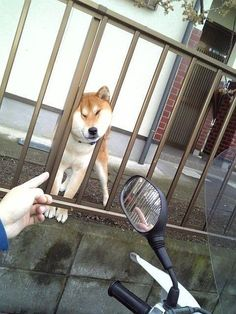 via via via via via via via via via via via via via via via via via via via via via via LOL Animals: Next Page–> Funny Dogs, Cute Dogs, Funny Animals, Cute Animals, Shiba Inu, Shiba Puppy, Dog Pictures, Animal Pictures, Japanese Dogs