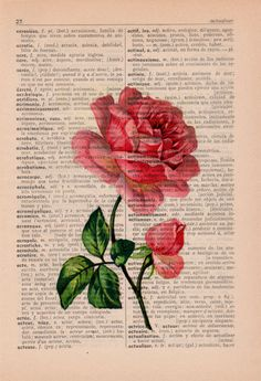 Vintage Book Print Dictionary or Encyclopedia Page Print- Book print Rose on Vintage Book art - arte - Buch Vintage Book Art, Newspaper Art, Book Page Art, Dictionary Art, Anatomy Art, Rose Art, Antique Books, Aesthetic Wallpapers, Vintage Pink