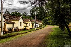 Reserva Florestal (Horto) - Rio Claro / SP