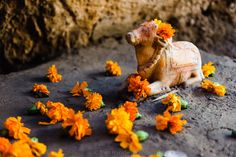 Cave temple outside Udaipur.  #Udaipur #travel #India #photography #Rajasthan #temple #flowers #offerings #cow #holycow