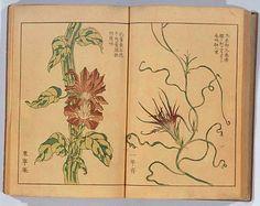 "朝顔三十六花撰 - ""Morning glories"" by Hattori Sessai (b.1807 - d.?) - 1854 (selection out of 36 prints)"