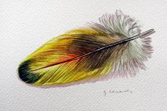 Macaw Feather Original Watercolor feather painting by jodyvanB