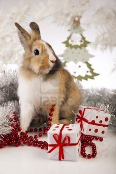 christmas rabbit - Google zoeken