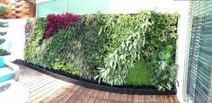 Muro verde green wall