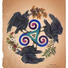 » Celtic Ravens – Myth and Magic