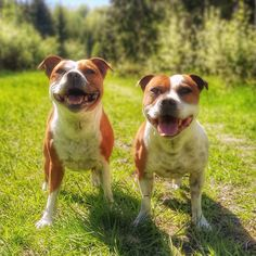 Bull Terriers, Family Dogs, Happy Weekend, All Dogs, Pitbulls, Board, Animals, Dogs, Dog