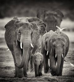 The Very Best of African Wildlife Photography by Billy Dodson   Photography Office