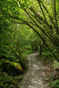 Whatcom Falls Park Trail | Bellingham, Washington