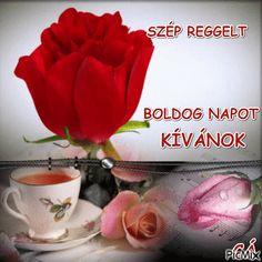 Joelle, Beautiful Roses, Good Morning, Adorable Animals, Buen Dia, Bonjour, Good Morning Wishes